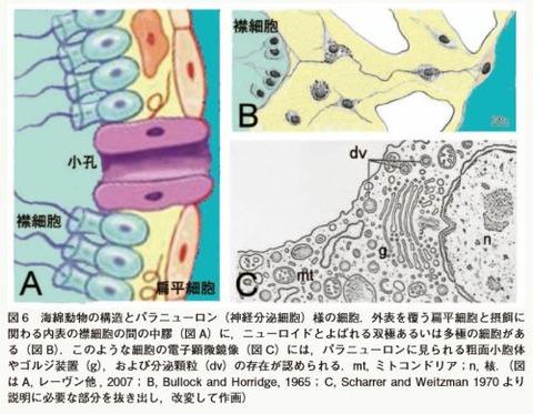 paraneuron