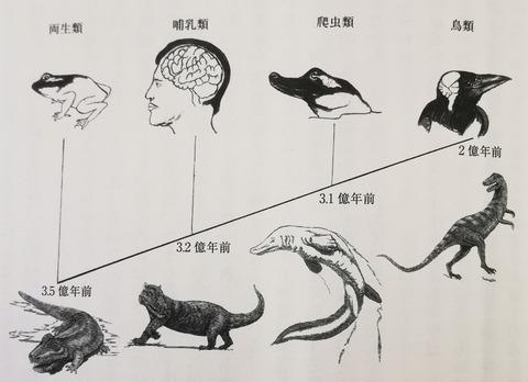 進化系統図