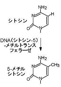 https://livedoor.blogimg.jp/shosuzki/imgs/d/9/d9e06985.jpg