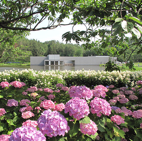土門拳記念館と紫陽花