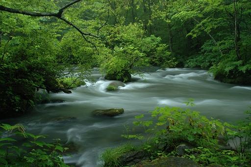初夏の奥入瀬渓流