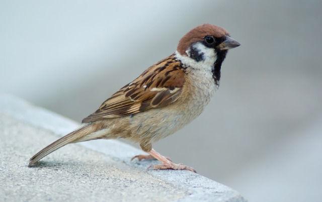 鳥類最強ランキング