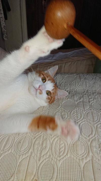【悲報】猫、何が楽しくて生きてるかわからない
