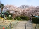 春の蹴上インクライン疎水公園