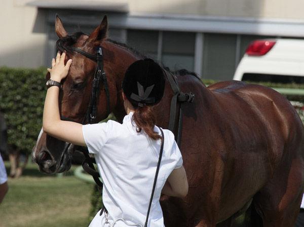 私、厩務員としてパドックで馬引...