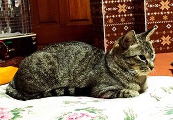 cat_20150101_3