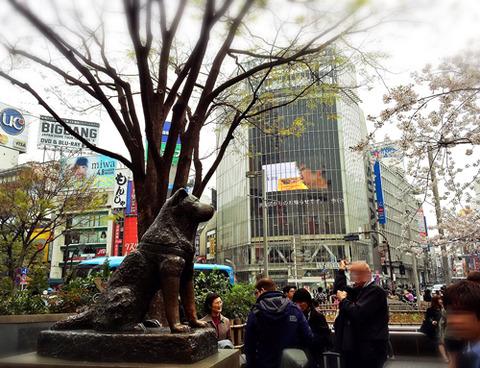 ハチ公_桜_渋谷