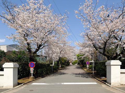 Kumamotokoukou-seimon
