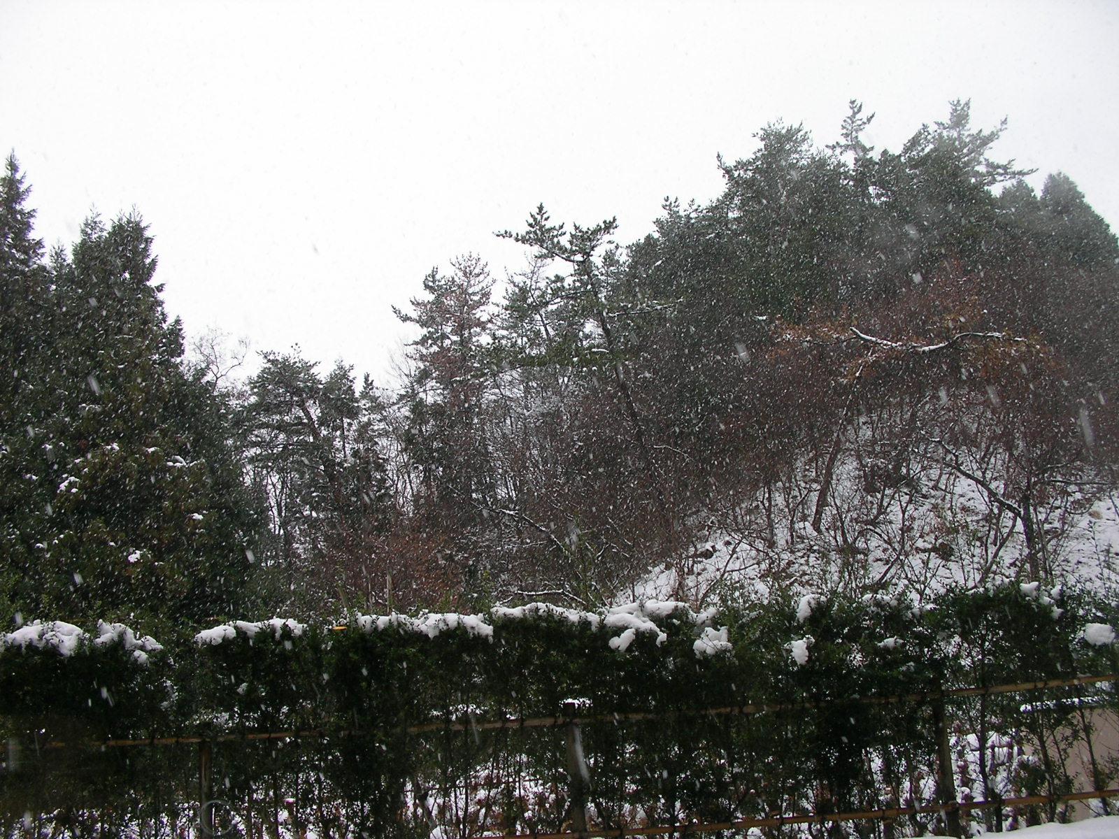 20141222_14.jpg