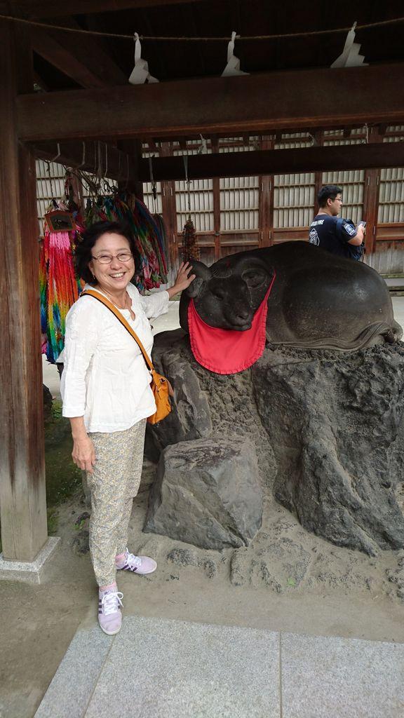 11牛嶋神社の牛