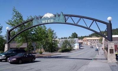 4499058-Weed_Siskiyou_County_California_Weed