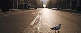 empty-road-lockdown-large_tcm27-75489_w1228_n