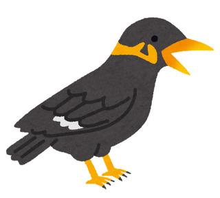 bird_kyukanchou