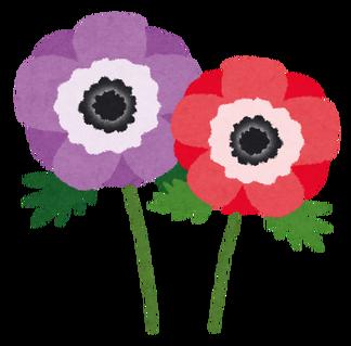 flower_amemone