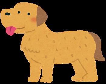 dog_golden_retriever