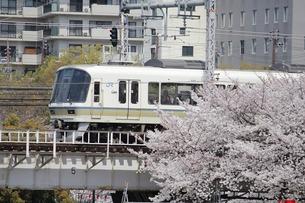 221系 桜