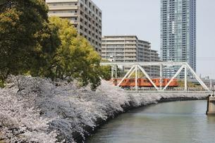103系 桜