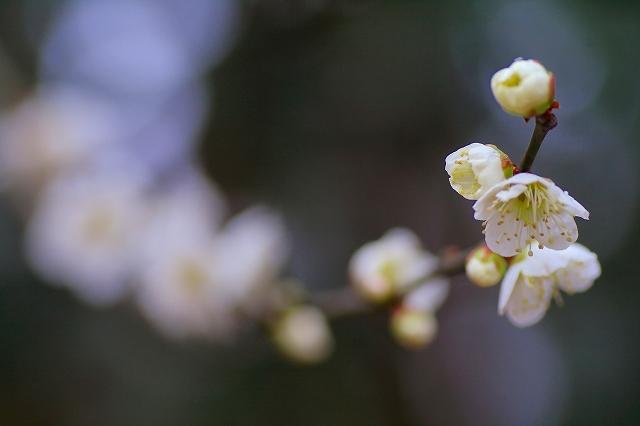 しゅくしゅくと春を待つ