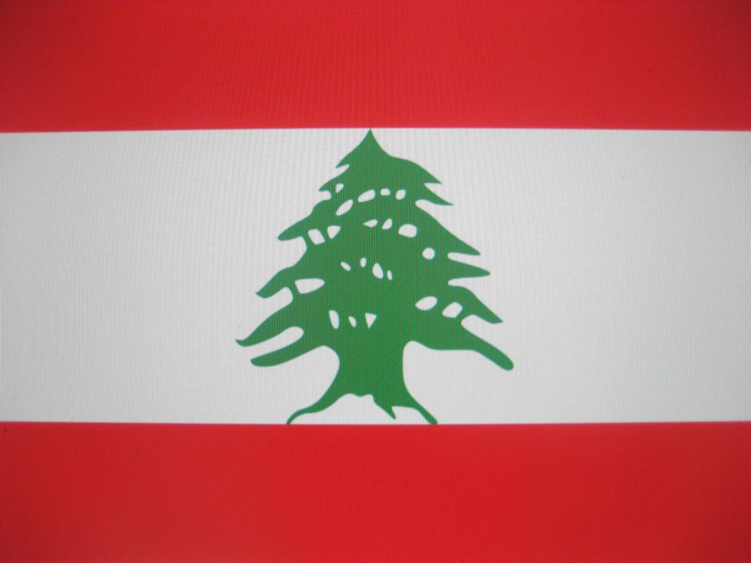 レバノンスギの画像 p1_27