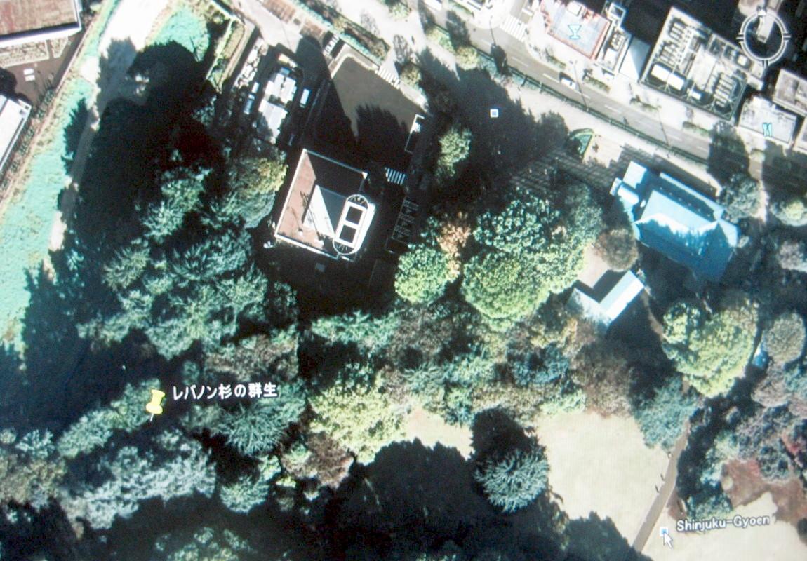 レバノンスギの画像 p1_30