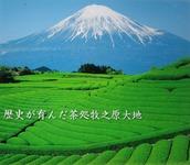 日本一の茶処・牧之原台地