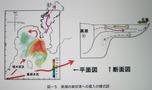 黒潮の東京湾への貫流模式図