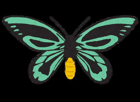 bug_alexandra_toribane_ageha
