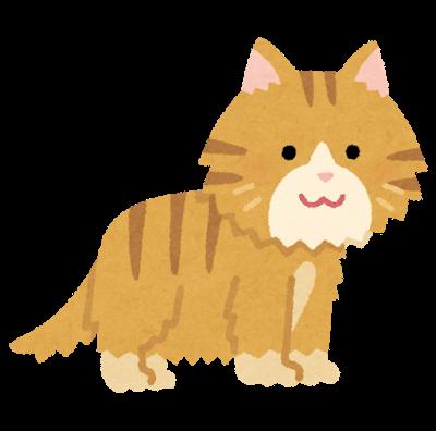 cat_hair_long