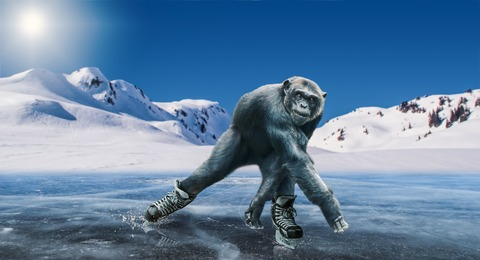 chimpanzee-3540046_1920
