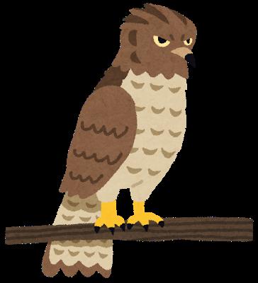 bird_taka