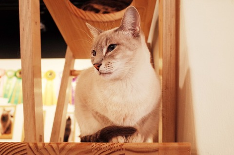 cat-1160233_1920