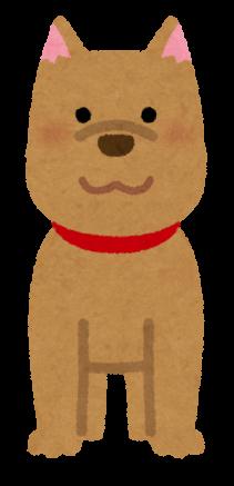 animal_dog_front