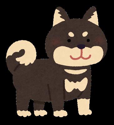 dog_shibainu_black