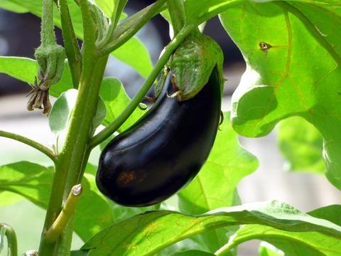 vegetable-2584412_1920