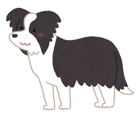 dog_Border_Collie