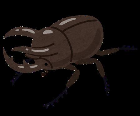 bug_kabutomushi_caucasus_ookabuto