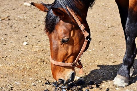 horse-3295801_1920