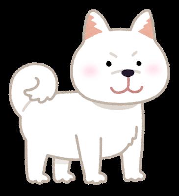 dog_shibainu_white
