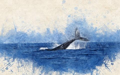 whale-2998812_1920