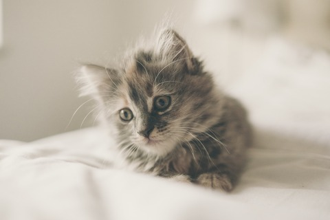 kitten-1031261_1920