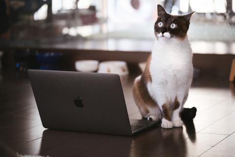 cat126IMGL6384_TP_V
