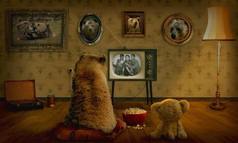 bear-3145874_1920