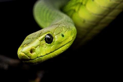 snake-3979601_1920