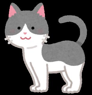 cat05_moyou_gray_moyou_white