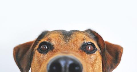 dog-838281_1920