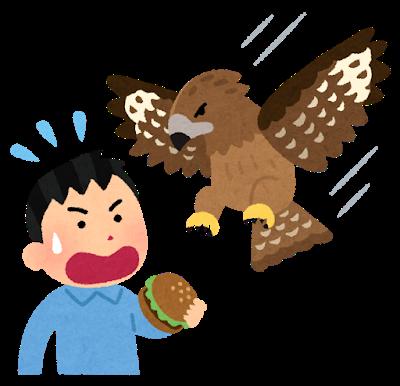 bird_tonbi_jiko