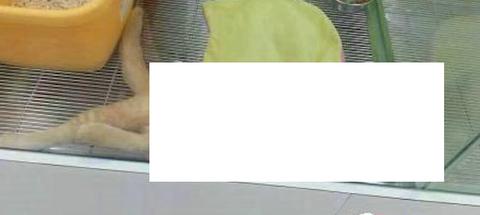 【!?】完全に売られる気ナッシングの猫が話題にwwwwwwww