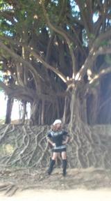 ギャル革命  ガジュマルの木全体