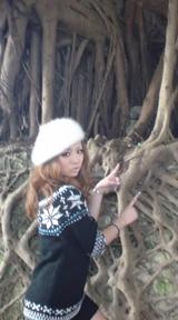 ギャル革命  ガジュマルの木