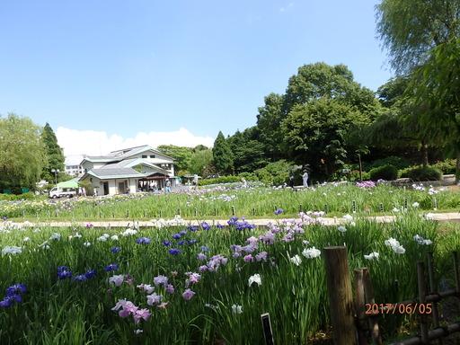 123横須賀しょうぶ園